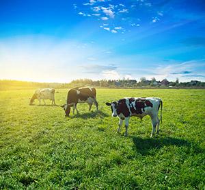 agrarisch vastgoed achterhoek en liemers